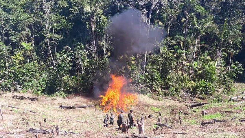 Destruyen 410 mil plantas de coca y un centro de acopio en la frontera con Colombia